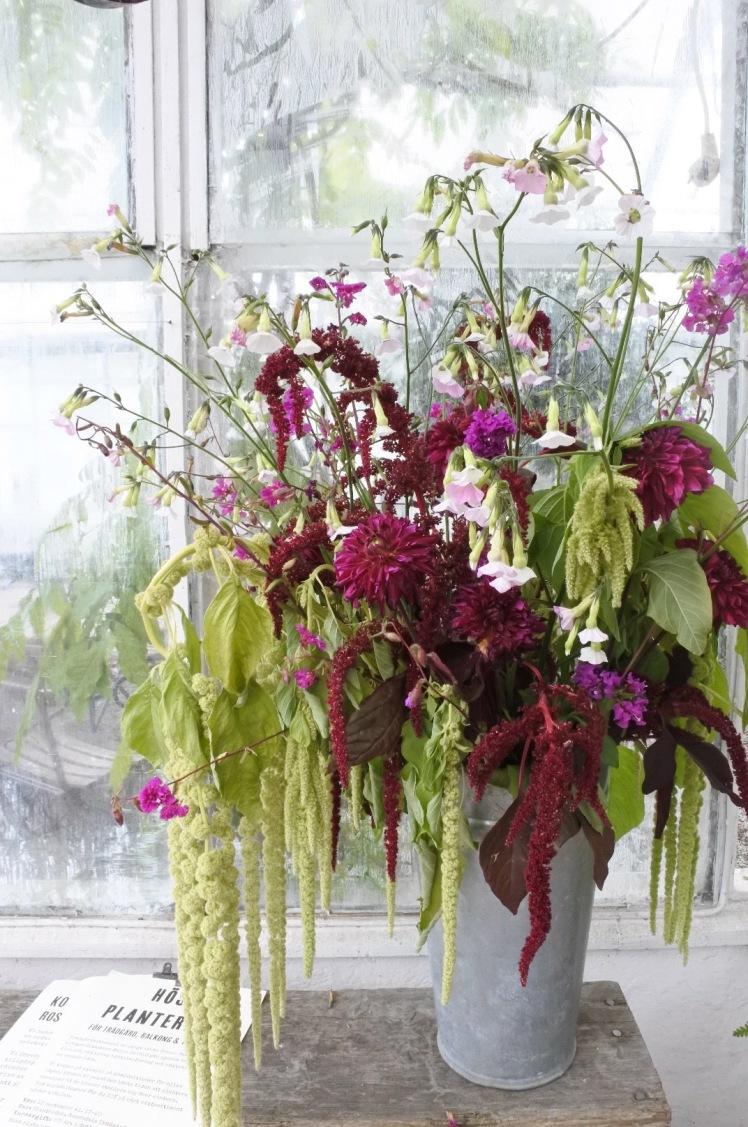 rosendalflowers