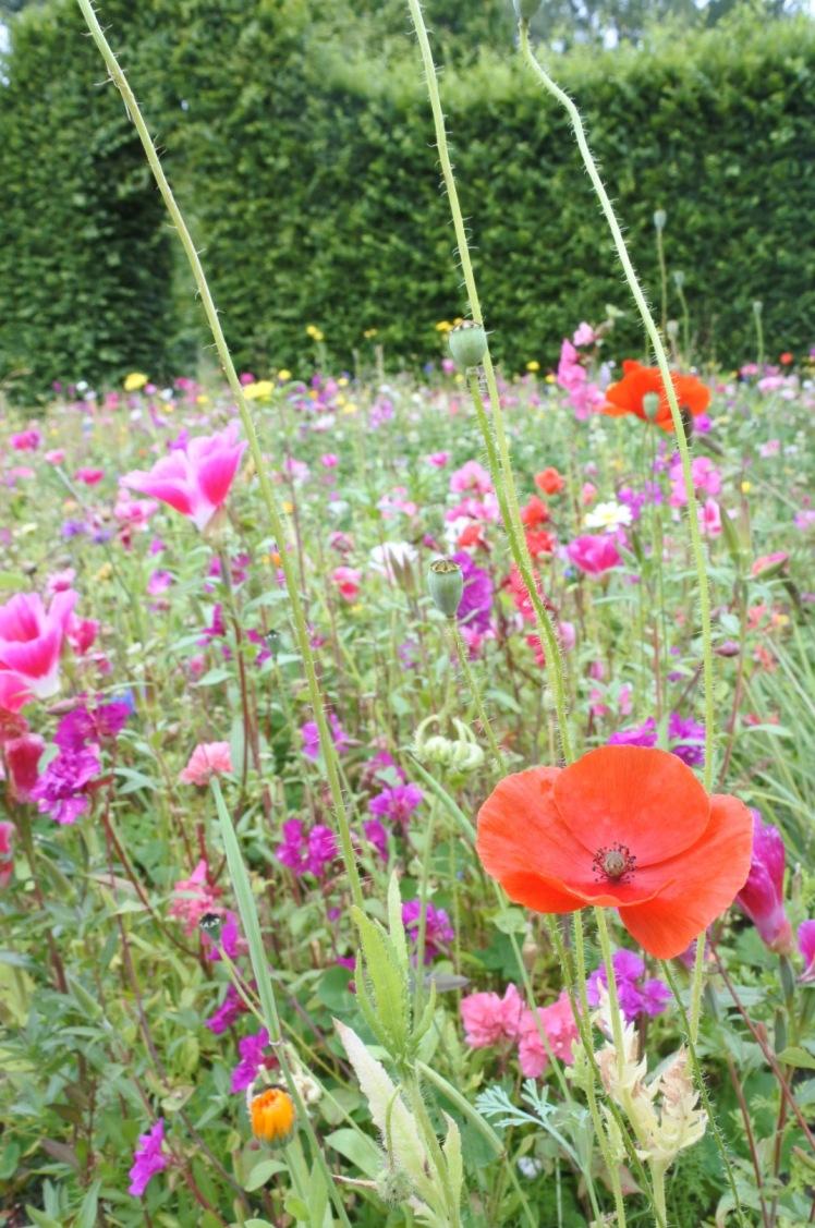 wildflowersatrosendals